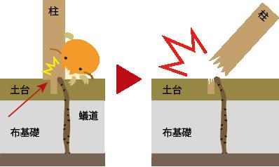柱のシロアリ被害